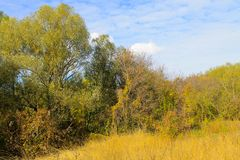 Deciduous forest on autumn Royalty Free Stock Images