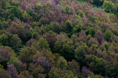Deciduous forest in autumn colors. Seasonal change temperate for Stock Photos