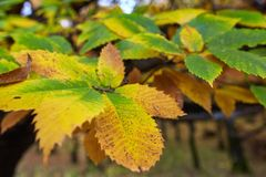 Deciduous forest in the autumn Stock Image