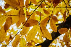 Deciduous forest in the autumn Royalty Free Stock Photos