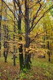Deciduous forest in the autumn Stock Photos