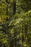 Deciduous forest Royalty Free Stock Images