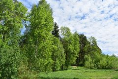 A deciduous forest of birch, pine, spruce grass road and clouds of white the beautiful sky cable. Beautiful nature in spring and summer outside the city royalty free stock photography