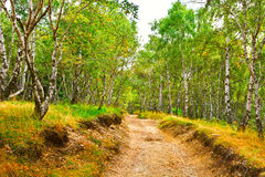 Deciduous Forest Stock Image