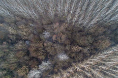 Deciduous forest from drone Stock Images