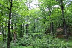 Deciduous forest Stock Photography