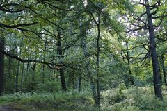 Deciduous forest. landscape in green tones. Forest of Central Europe. deciduous forest. landscape in green tones royalty free stock image