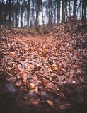 Deciduous forest in late autumn. With orange leafs on the way Stock Photo