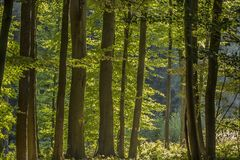 Deciduous forest in Lower Saxony, Germany Stock Photography