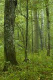 Deciduous forest rain after. Rich deciduous forest rain after,early autumn,middle europe,poland royalty free stock photos