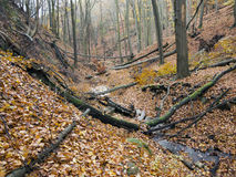 Deciduous forest with ravines Royalty Free Stock Images
