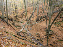 Deciduous forest with ravines Royalty Free Stock Image