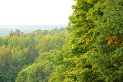 Deciduous forest at summer. Deciduous forest at summer day on Duderhof heights, Russia stock images