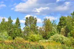 Deciduous forest at summer. Royalty Free Stock Photos