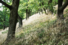 Deciduous forest in summer, seasonal natural scene Stock Images