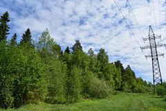 Deciduous forest and the tops of fir trees grass road white clouds sky electricity. Beautiful nature in spring and summer outside the city stock images