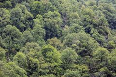 Deciduous green trees in forest on mountainside. Deciduous green trees in forest on mountaine. Concept of an ecosystem and healthy environment. Neighborhood of Stock Photo