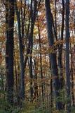 Deciduous jesień w górach fotografia stock