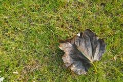 Deciduous leaf Stock Photo