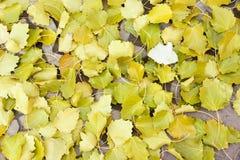 Deciduous leaves Stock Photo