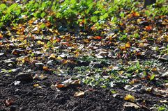 Deciduous litter from mix of fallen autumn leaves on black ground on the background of green grass. Autumn background Stock Photos