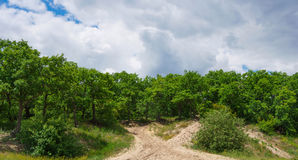 Deciduous oak forest on a hill Royalty Free Stock Photos