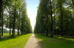 Deciduous summer forest with very straight path Royalty Free Stock Images
