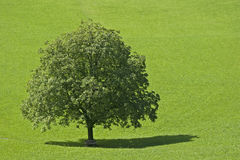 Deciduous tree, Royalty Free Stock Photo