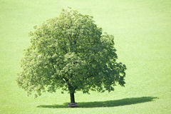 deciduous tree royaltyfria bilder