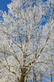 Deciduous tree. S, with frost on branches Stock Photo