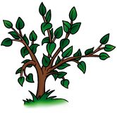 Deciduous Tree. Detailed cartoon illustration as vector vector illustration