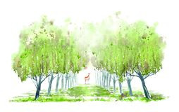Deciduous tree alley and deer. Spring landscape. Watercolor hand drawn illustration stock illustration