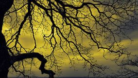 Deciduous tree. A deciduous tree with a bright glowing yellow sky royalty free stock images