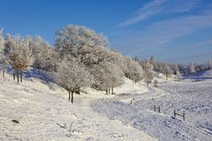 Deciduous tree forest with frost. In winter landscape Royalty Free Stock Images