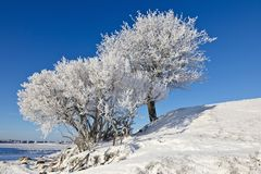 Deciduous tree forest with frost. Deciduous tree on a hill with frost in winter landscape Royalty Free Stock Photos