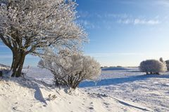 Deciduous tree forest with frost. Deciduous tree with frost in winter landscape Royalty Free Stock Photography
