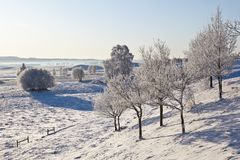 Deciduous tree forest with frost. Deciduous tree on hillside with frost in winter landscape Stock Image