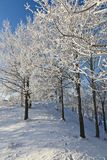 Deciduous tree forest with frost. Deciduous tree on a hill with frost in winter landscape Stock Photography