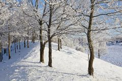 Deciduous tree forest with frost. Deciduous tree on a hill with frost in winter landscape Stock Images
