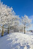 Deciduous tree forest with frost. Deciduous tree on a hill with frost in winter landscape Royalty Free Stock Images