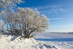 Deciduous tree forest with frost. Deciduous tree with frost in winter landscape Royalty Free Stock Image