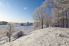 Deciduous tree forest with snow. Tree forest with frost and snow in winter landscape Stock Image