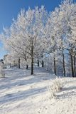 Deciduous tree forest with snow. Deciduous tree on a hill with frost in winter forest Stock Photo