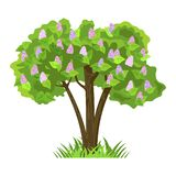 Deciduous tree in four seasons - spring, summer, autumn, winter. Nature and ecology. Green tree illustration royalty free illustration