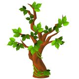 A deciduous tree with green leaves isolated on white background. Vector cartoon close-up illustration. A deciduous tree with green leaves isolated on white royalty free illustration