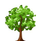 Deciduous tree isolated on white. Vector illustration. Stock Photo