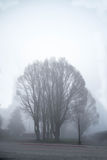 Deciduous tree. The leafless trees that can barely be seen through a misty morning stock images