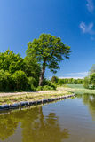 Deciduous tree near the canal on a sunny day Stock Photo