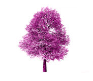 Deciduous tree rendered Stock Images