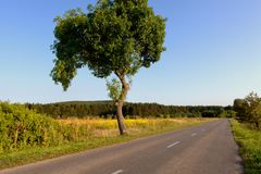 Deciduous tree by the road. During sunny day Royalty Free Stock Images